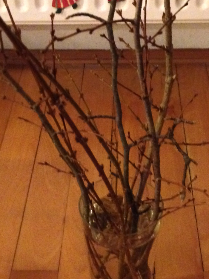 Branches for St. Barbara