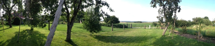 A garden view